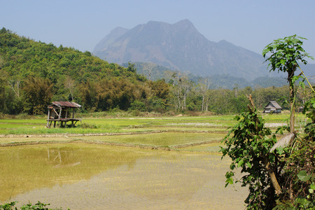 south east: Rice field, Laos, South East Asia