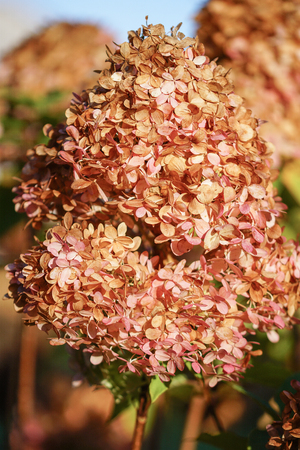 Colours of autumn, withered flower heads Stock Photo