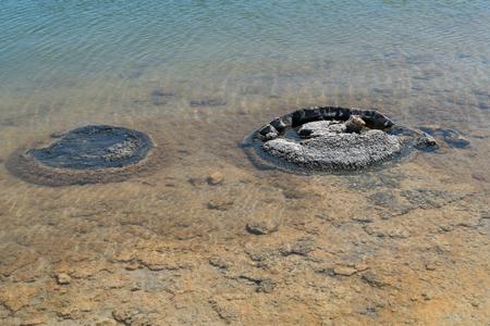 Stromatolite on lake Thetis in the Nambung National Park, Western Australia