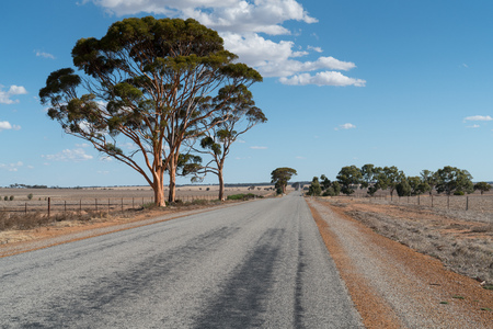 Endless road with distinctive tree, outback of Western Australia