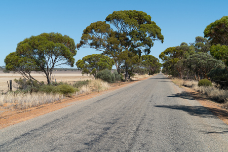 Endless road with distinctive trees, outback of Western Australia Stock Photo