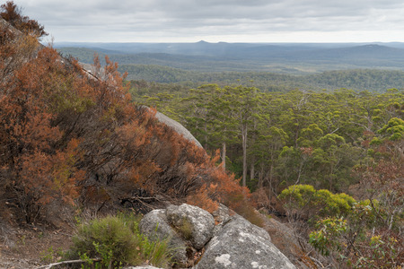 Panoramic view over the forests of the Mount Frankland National Park, Western Australia