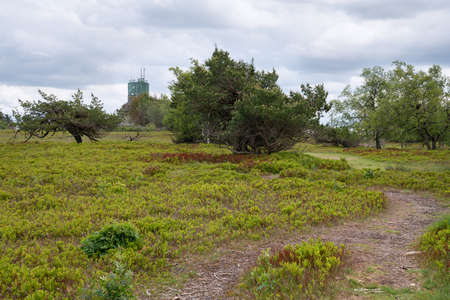 Panoramic image of the heath landscape on the peak of the Kahler Asten, most famous mountain of Sauerland region, Germany Stock Photo