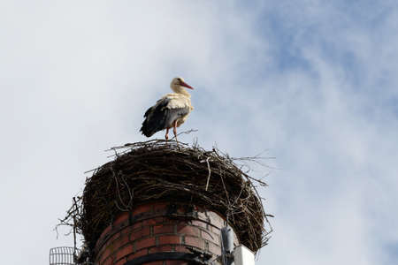 hotbed: Stork standing in his nest on the chimney