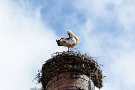 hotbed: Stork standing in the nest on the chimney and dressing its feathers Stock Photo
