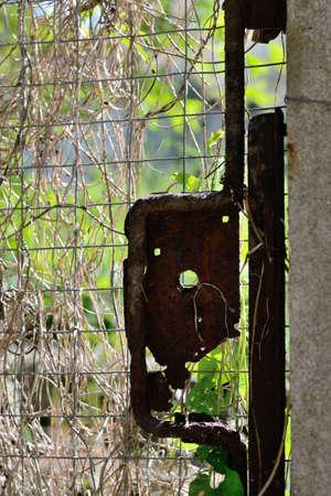 garden gate: rusted lock on a garden gate