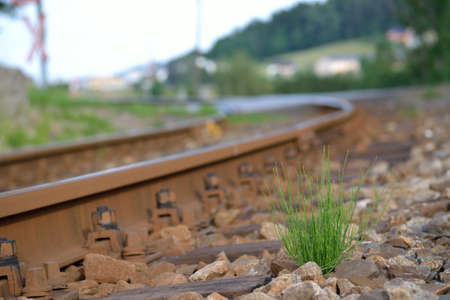 tuft: a single tuft of grass growing beside the railway lines Stock Photo