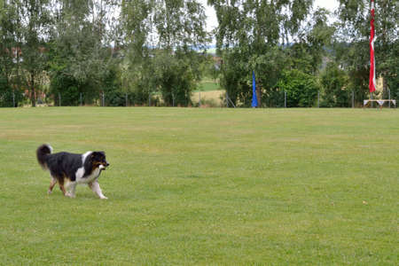 fetch: Dog learns to fetch an object Stock Photo