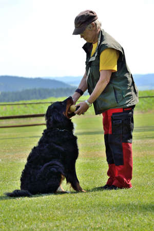 fetch: Dog owner trained fetch with Bernese Mountain Dog