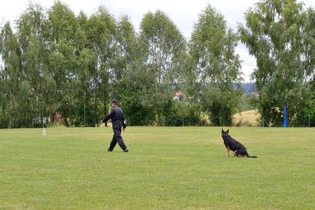 obediencia: Se permite entrenador de perros para asentarse y entrenamiento de obediencia