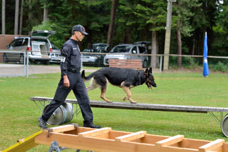 movable: Dog trainer allows German Shepherd go over movable barrel bridge