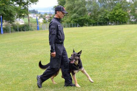 exemplary: German Shepherd is exemplary walk at its owner