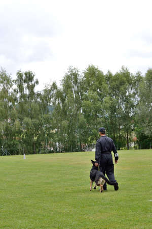 drudgery: Dog trainer exercises with German Shepherd go by foot