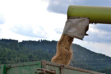 cosechadora: Cosechadora invita cereales cosechados con �xito