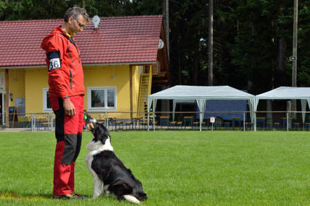 retrieving: Border Collie in retrieving - dog trainer in rescue dog test Stock Photo