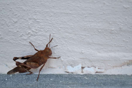 feeler: Close up of a cricket in the house wall