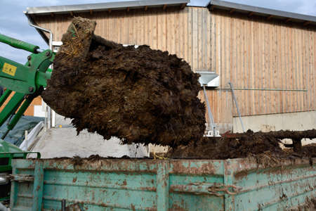 Cow dung is loaded with tractor in spreader