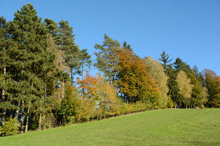 bosk: colorful mixed forest on a sunny autumn day