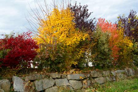 seasonable: Autumnal shrubs as a privacy
