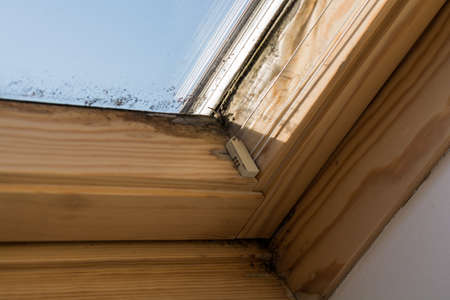On roof windows mildew forms by inadequate ventilation Stock Photo