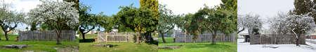 estaciones del año: Manzano En las cuatro estaciones - panorámica horizontal