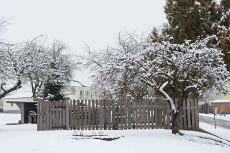 countrified: old apple tree in snowy winter