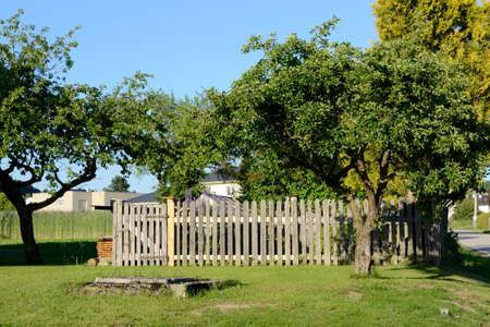 old apple tree in full juice - summer season