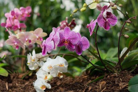 mothering: bright colorful orchids