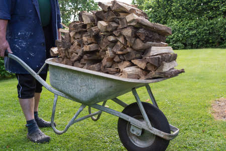 Person brings with wheelbarrow a dried firewood Stock Photo