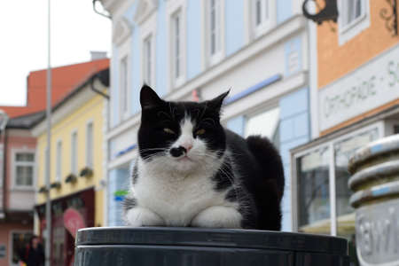 felis silvestris catus: House cat makes himself the garbage can in the middle in the town square cozy Stock Photo
