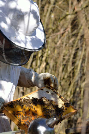 smoker: Beekeeper with honeycomb in the foreground Smoker