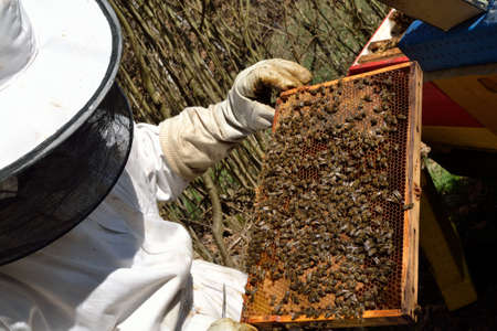 controlled: Beekeepers controlled honeycomb