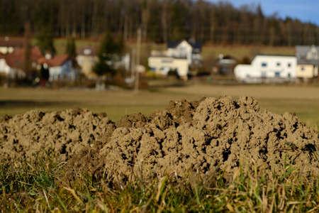 molehill: several molehills
