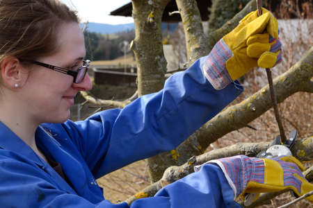 fostering: young woman at winter pruning a fruit tree Stock Photo