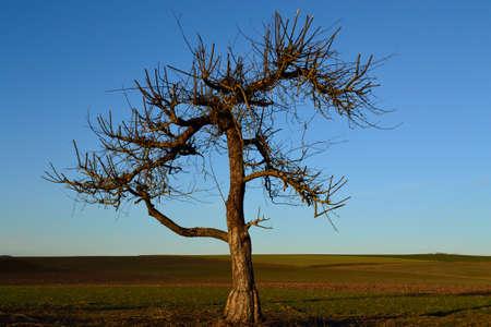 fostering: freshly cut old fruit tree