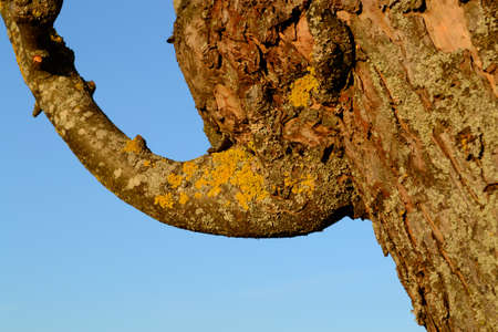 fruit tree: Branch grows at a fruit tree strange - close-up