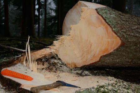 chock: freshly cut spruce with tool