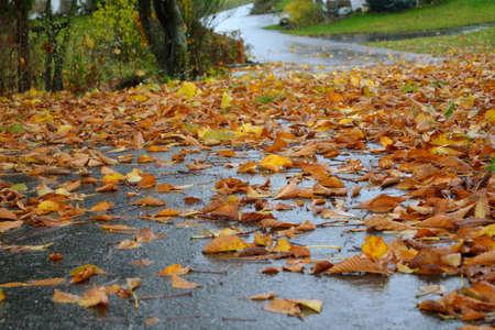 skidding: Danger of slipping on the wet pavement Leaves