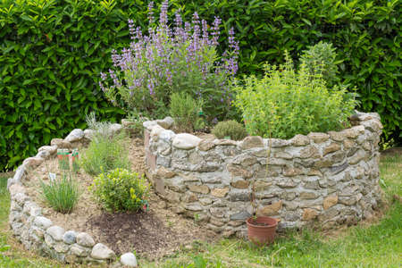 medicinal herb: Herb spiral of stone with flowering sage and other culinary herbs
