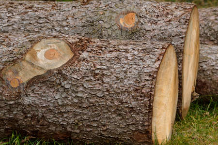 sustained: cut trees - spruce logs