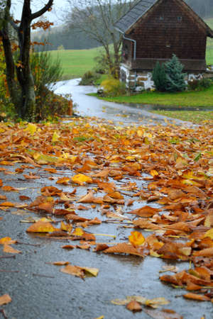 Leaves on the road ensures slipping