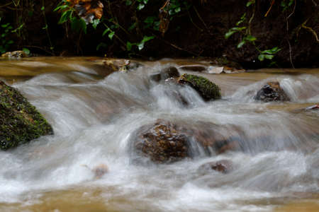 murmur: Stream in the forest with small waterfalls Stock Photo