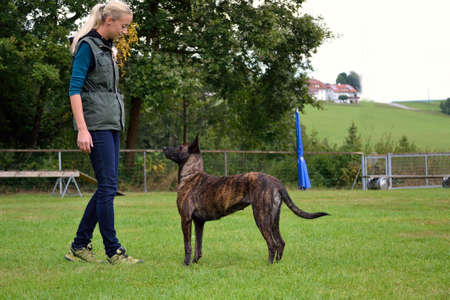 herder: Young dog trainer when training with Herder