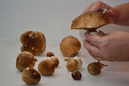 edible: Edible mushrooms are processed in the kitchen Stock Photo