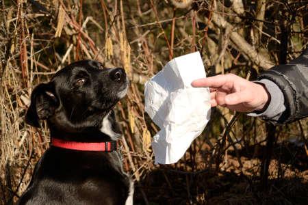 hazelnut tree: black dog beside hazel with white handkerchief