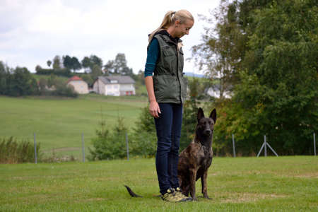 Dog trainer when training with Herder dog
