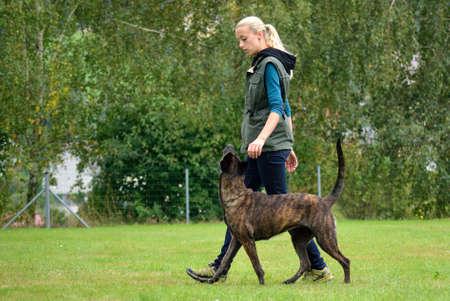 Dog trainer when training with Dutch Shepherd