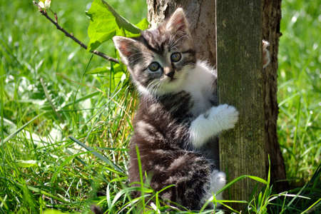 felis silvestris catus: Portrait of kittens in the nature - loving gaze Stock Photo