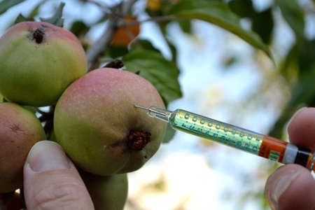 genetically engineered: In old variety of apple growth hormone is injected