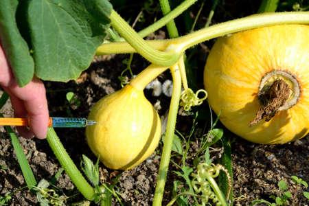 genetically engineered: Symbol photo for genetic manipulation of vegetables
